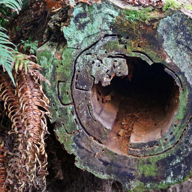 """""""Deception Pass Hollow Log"""" stock image"""