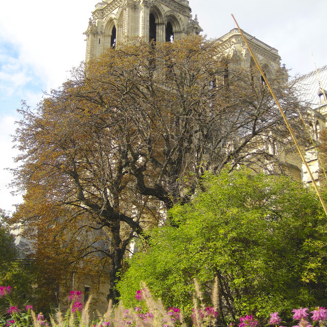 """Notre-Dame de Paris Cathedral and garden in spring before the fire"" stock image"