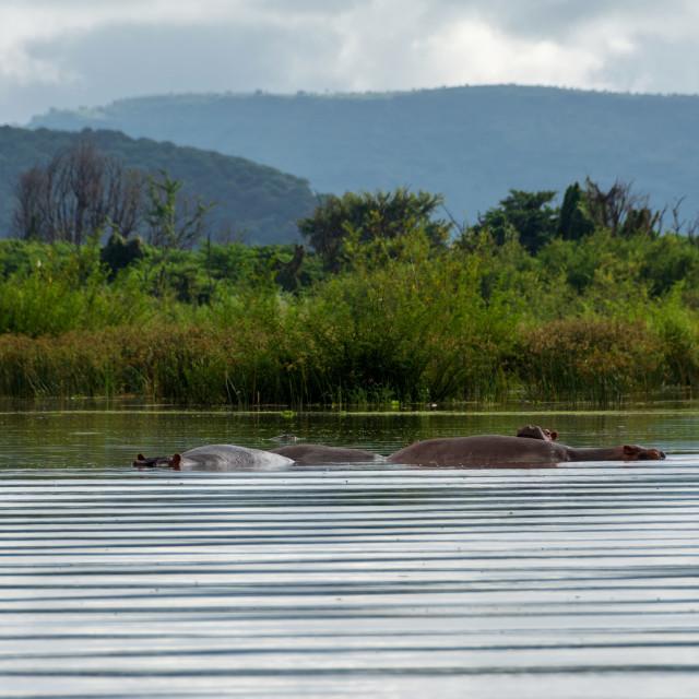 """lake chamo in rift valley ethiopia"" stock image"