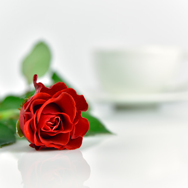 """Beautiful red rose with cup of coffee in the morning"" stock image"