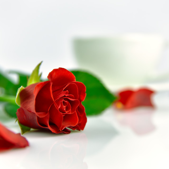 """Red rose with cup of coffee in the morning"" stock image"