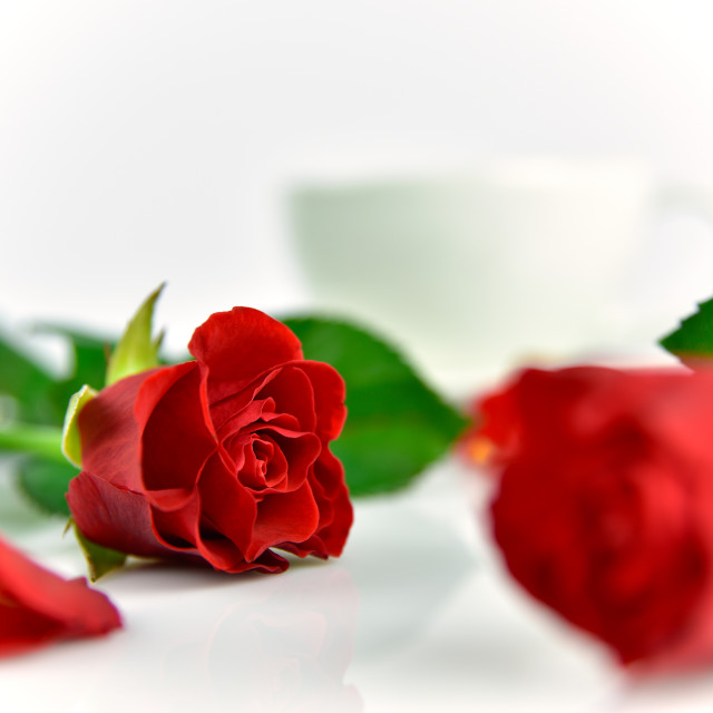 """Red roses background for Mother's day"" stock image"