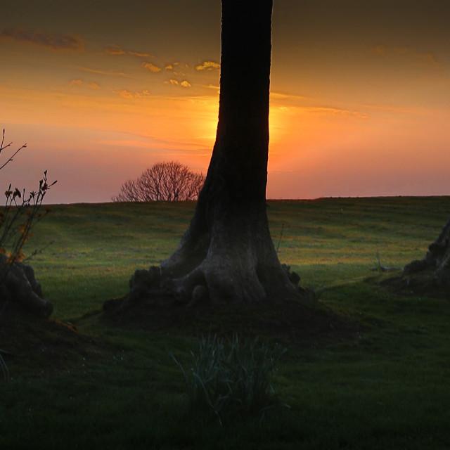 """Tree trunks at Ravenhill park"" stock image"
