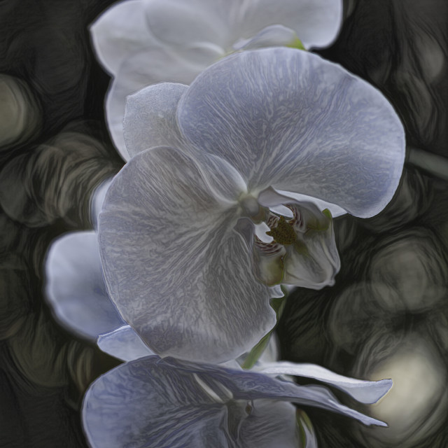 """""""Macro of White Orchid"""" stock image"""