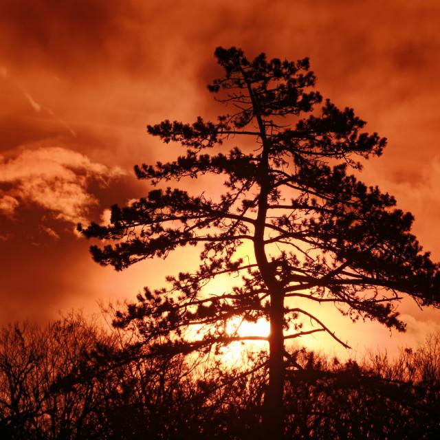 """""""Rocher canon sunrise"""" stock image"""