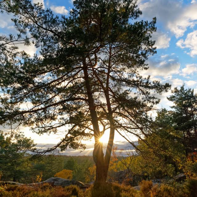 """""""Franchard Gorges sunrise"""" stock image"""