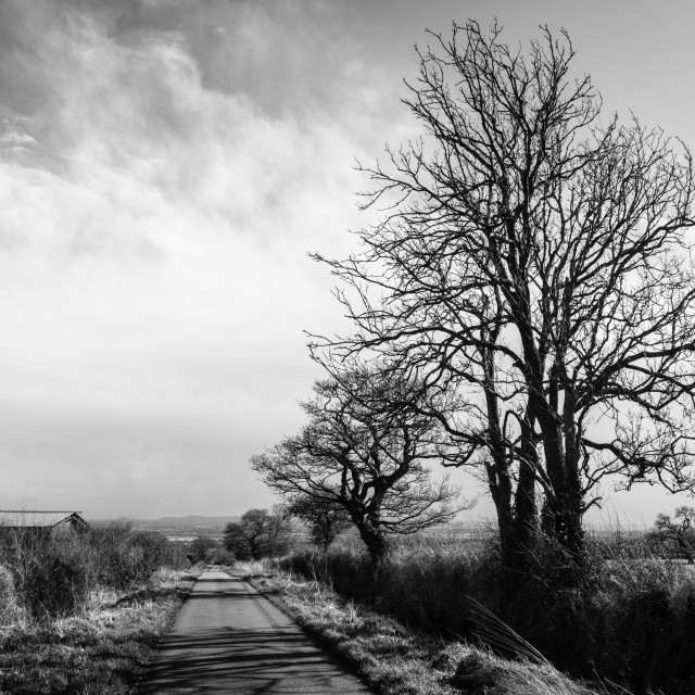 """Skeletal Trees"" stock image"