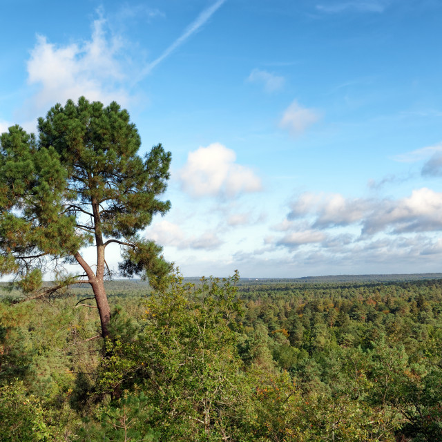 """""""Fontainebleau forest panorama"""" stock image"""