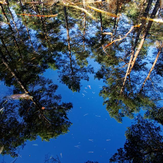 """Salamandres pond"" stock image"