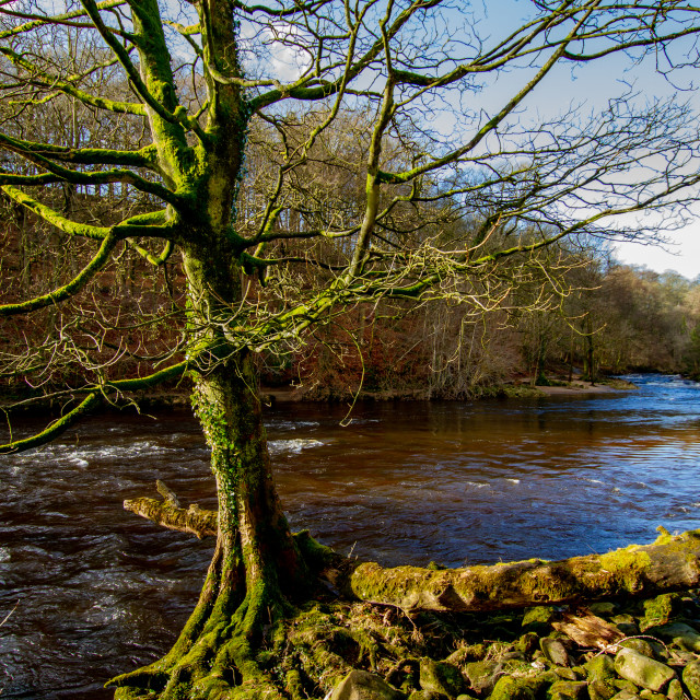 """""""River Wharfe at Bolton Abbey, Wharfedale"""" stock image"""