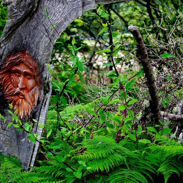 """""""The Green Man"""" stock image"""