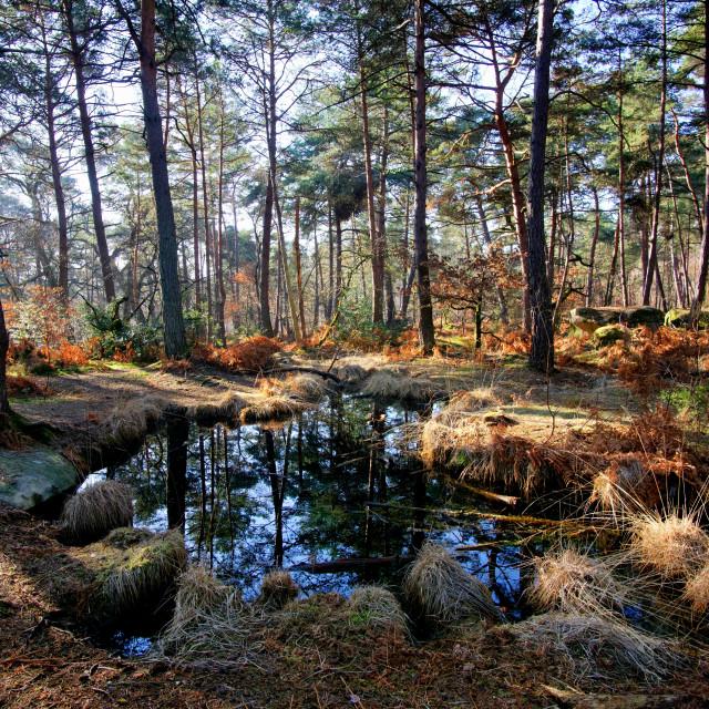 """Salamandre pond"" stock image"