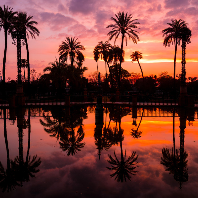 """""""Palm Trees Reflected in the Water in Maria Luisa Park at Sunset, Seville, Andalusia, Spain"""" stock image"""