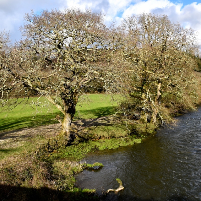 """""""The river near Blackpool Mill in Pembrokeshire."""" stock image"""