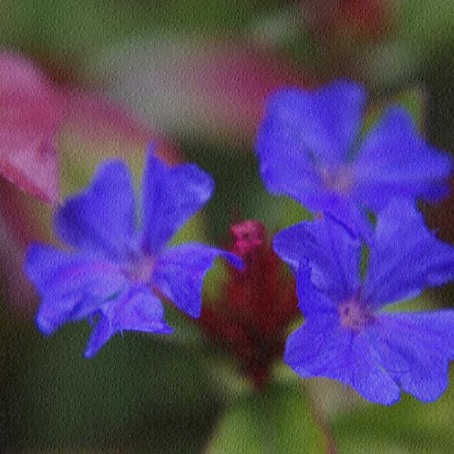 """Brilliant Blue Trio"" stock image"