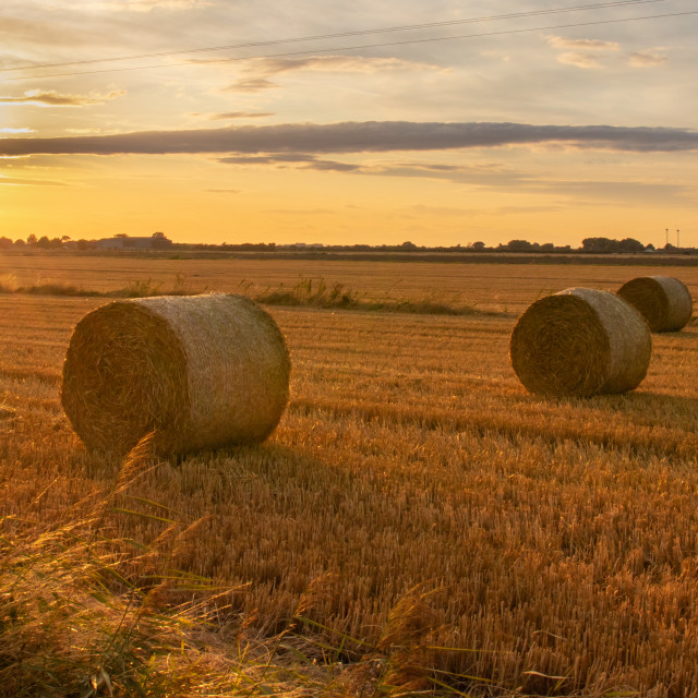 """""""Lincolnshire Harvest"""" stock image"""