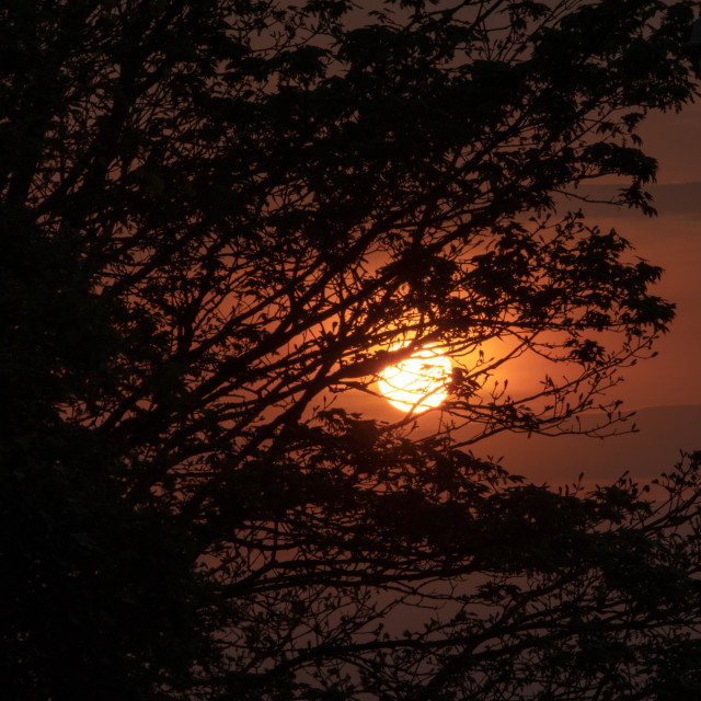 """""""Sunset behind a tree"""" stock image"""