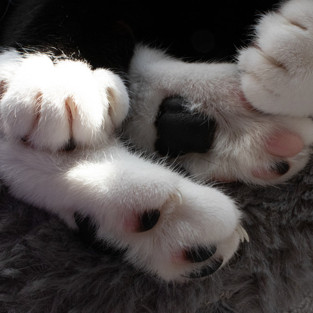 """""""Cat's Paws"""" stock image"""