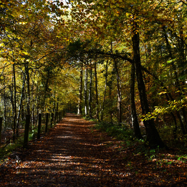 """""""An Autumn Walk in the Forest"""" stock image"""