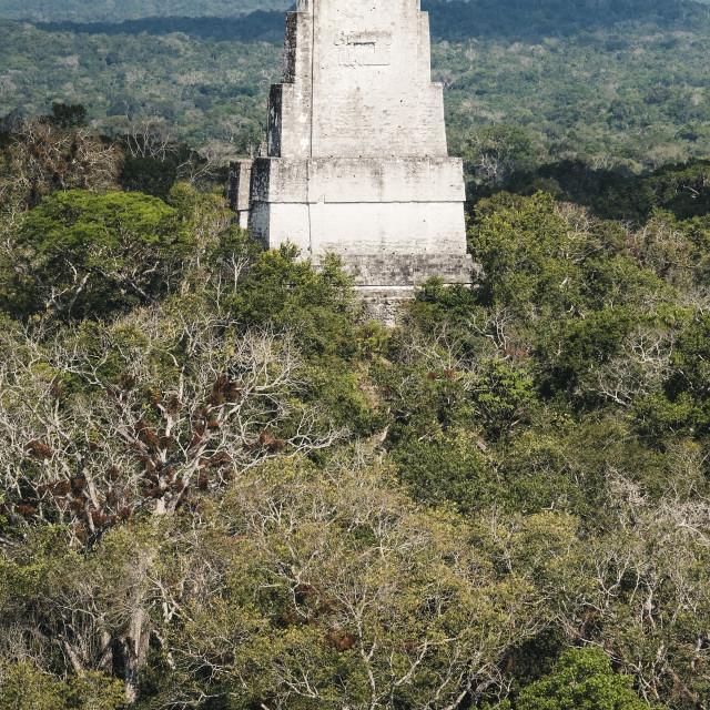 """Temple at Tikal"" stock image"