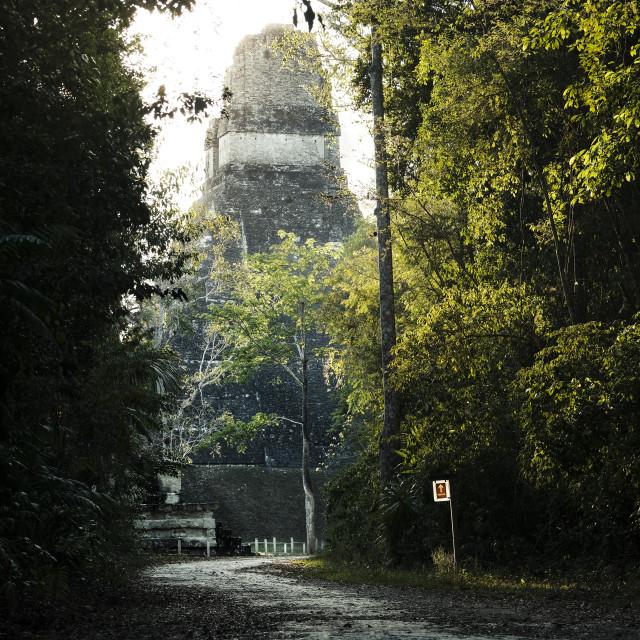 """""""Jaguar Temple Tikal"""" stock image"""