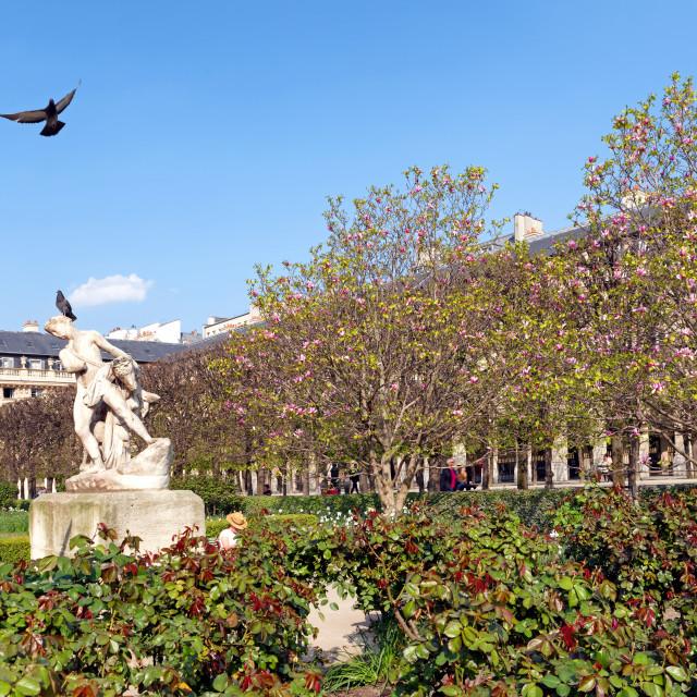 """""""Palais-Royal garden"""" stock image"""