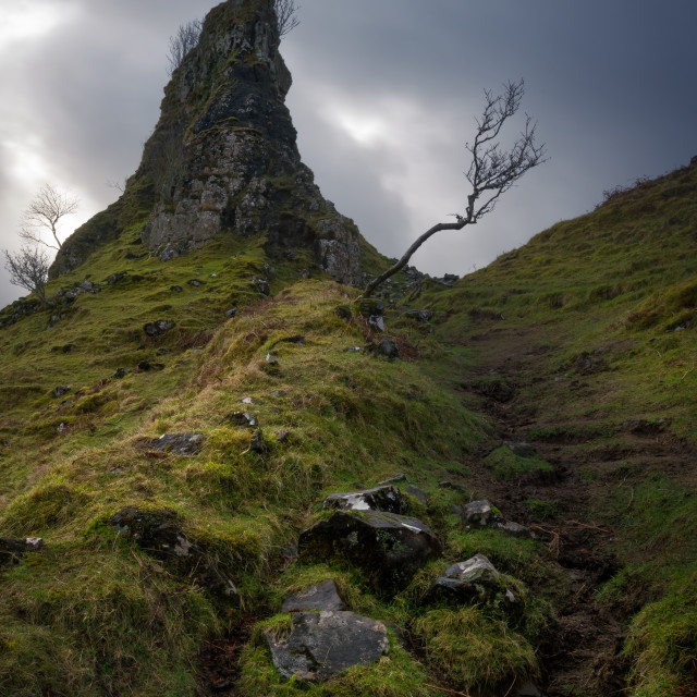 """The solitary tree, Isle of Skye, Scotland, United Kingdom. The Fairy Glen (Faerie) near Uig"" stock image"