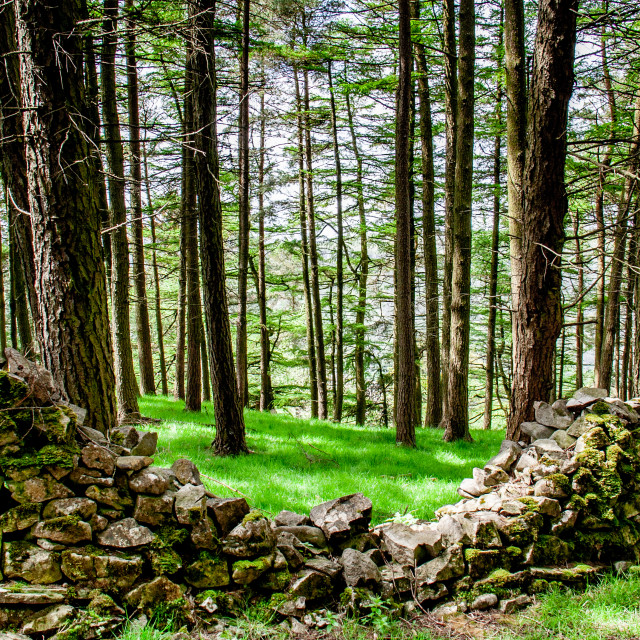 """""""Collapsed Dry Stone Wall on Dales Way Walk"""" stock image"""