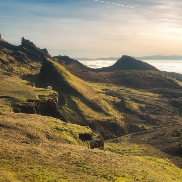"""Sunrise over the sheep at the Quiraing, Isle of Skye, Scotland, United Kingdom"" stock image"