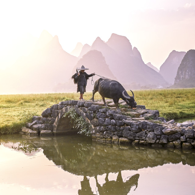 """""""A buffalo farmer enjoying the first of the early morning light"""" stock image"""