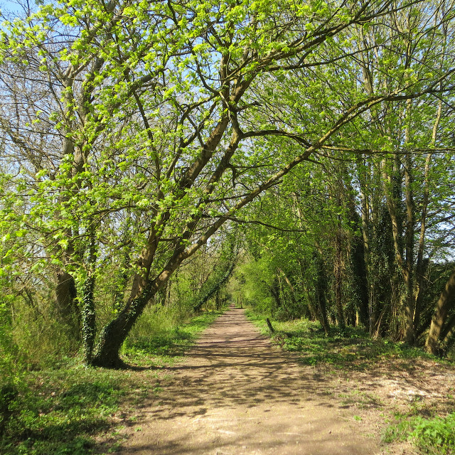 """Footpath in early spring"" stock image"