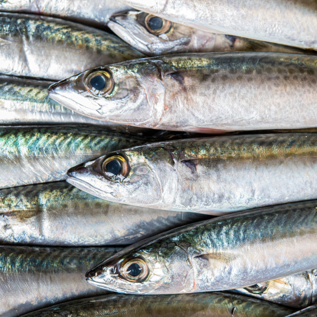 """Mackerel fish aligned full frame"" stock image"