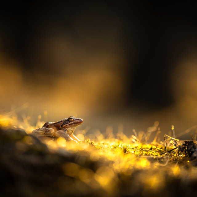 """""""A frog in the dark"""" stock image"""
