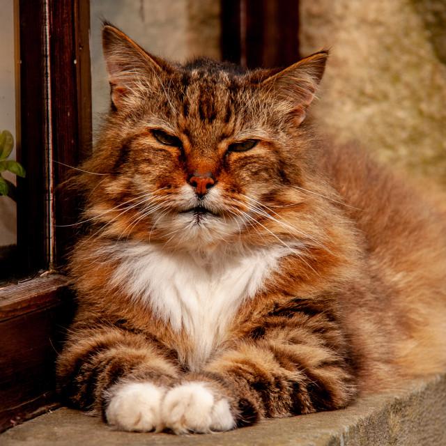 """""""Sleepy Cat"""" stock image"""