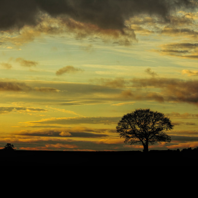 """THE TREE - DUSKY WINTERS EVENING - 2017-1"" stock image"