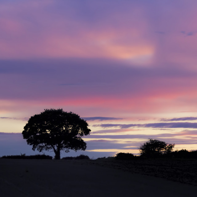 """""""THE TREE - Purple Passion - LATE SPRING EVENING - 2017-4"""" stock image"""