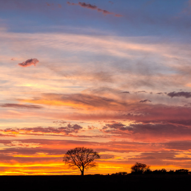 """""""THE TREE - Fire in the Sky - LATE SPRING EVENING - 2017-4"""" stock image"""