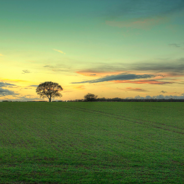"""""""THE TREE - Green Grass - LATE SPRING EVENING - 2017-4"""" stock image"""