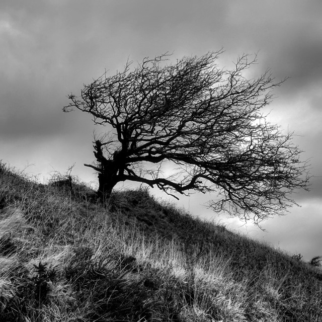 """""""Lone Tree at castle an Dinas."""" stock image"""
