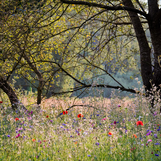 """""""The Meadow. Every Picture Tells A Story. Spring turns into summer."""" stock image"""