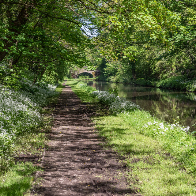 """""""Lancaster canal near Whinney Carr"""" stock image"""