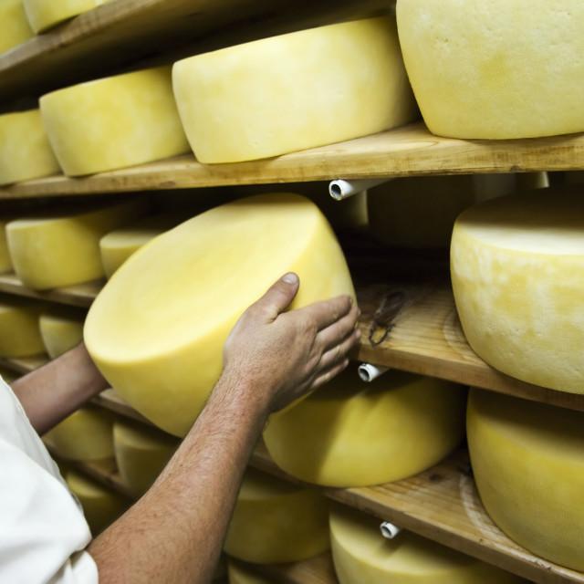 """Man isnspecting cheese"" stock image"