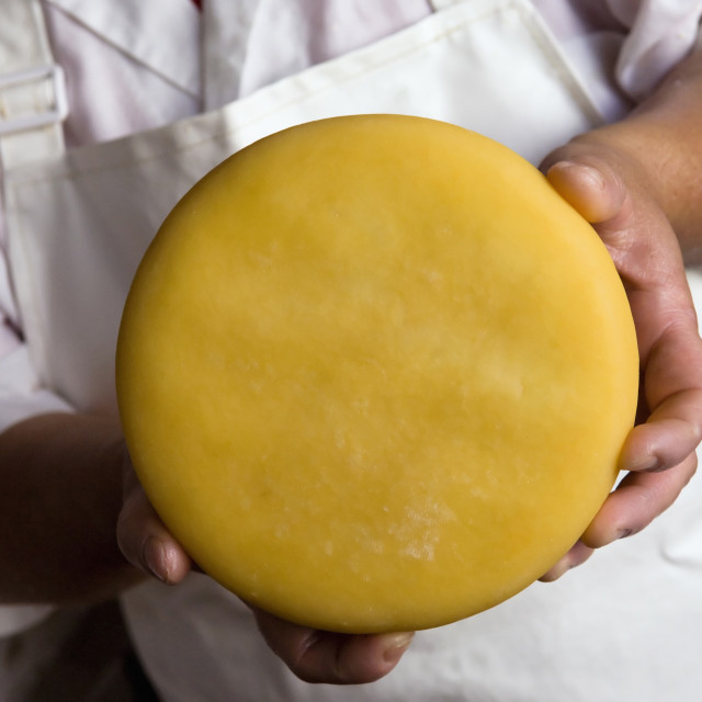 """""""Cheese in hands"""" stock image"""