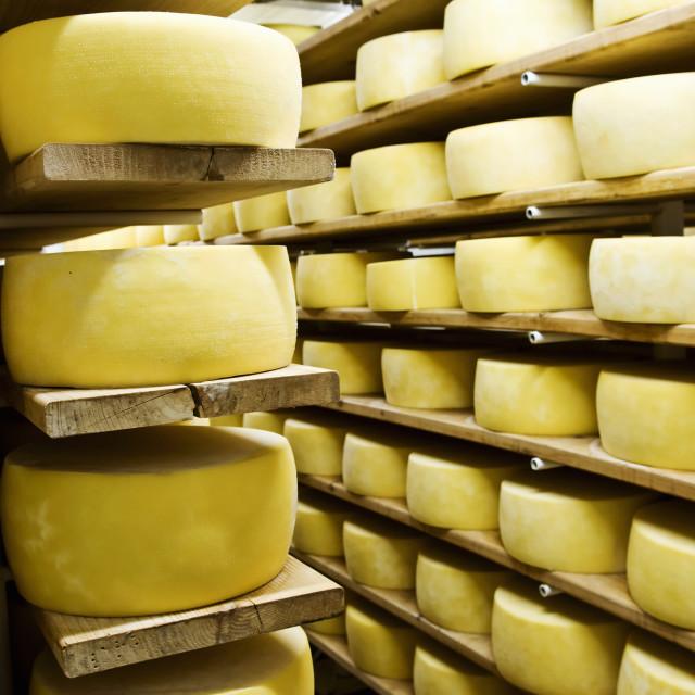 """Cheese in shelf"" stock image"