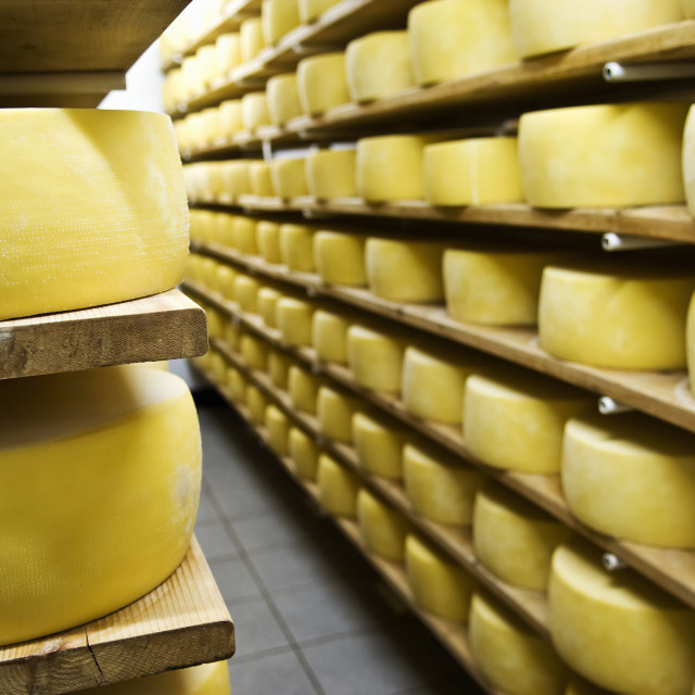"""Cheese drying"" stock image"