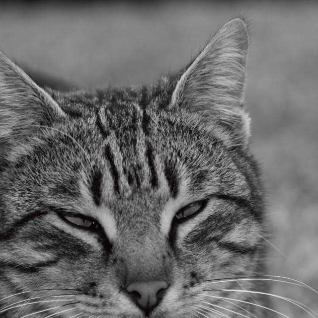 """Cat Squinting"" stock image"