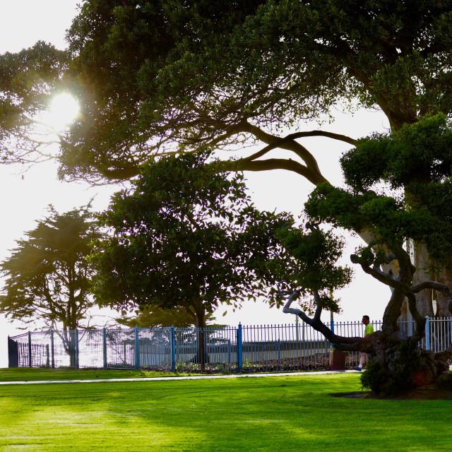 """""""Beach tree"""" stock image"""
