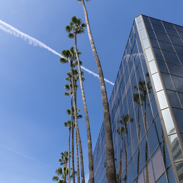 """""""Palm Trees And Modern Building"""" stock image"""