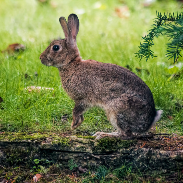 """""""Paws for thought - Spring Rabbit"""" stock image"""