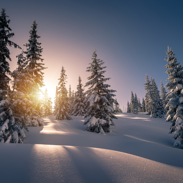 """Sun rays from behind the snow covered trees in the mountain"" stock image"